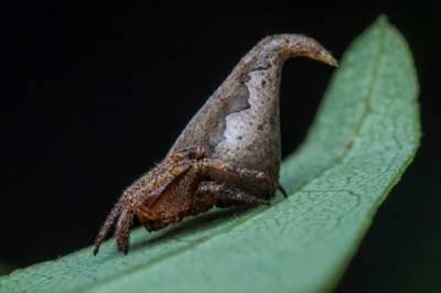 فلم ہیری پوٹر میں دکھائی جانے والی ٹوپی جیسی مکڑی دریافت