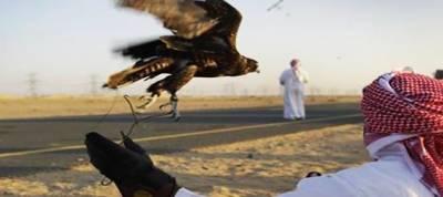 تلور کے شکار کیلئے آنے والا قطری شہزادوں کا وفدفیصل آباد ایئر پورٹ سے واپس روانہ