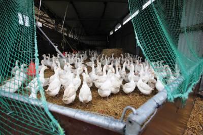 دنیا بھر میں برڈ فلو کی وبا ،یورپ اور ایشیا لپیٹ میں آگئے ،26لاکھ سے زائد پرندے تلف