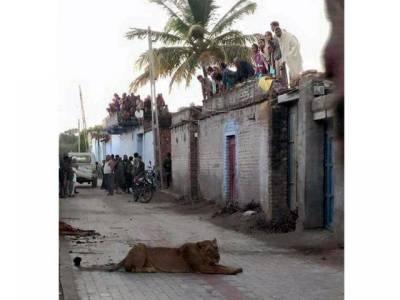 بھارت کی گلیوں میں خطرناک جانور کا راج لوگ خوف سے چھتوں پر چڑھ گئے