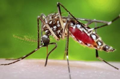 نئی دہلی ،'چکن گونیا 'وائرس کے 2600 سے زائد کیسز رپورٹ