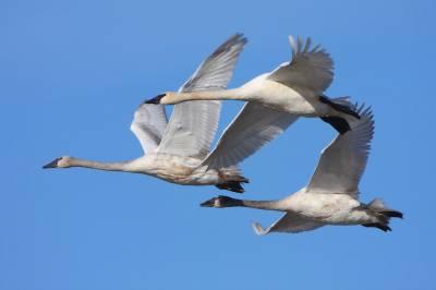 مہاجر پرندوں نے بڑھتے ہوئے عالمی درجہ حرارت کی نشان دہی کر دی