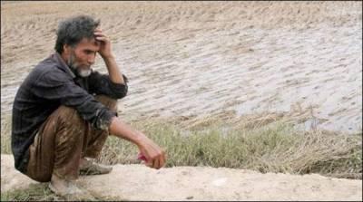 بھارتی کسانوں میں خودکشی کی شرح میں42 فیصد اضافہ
