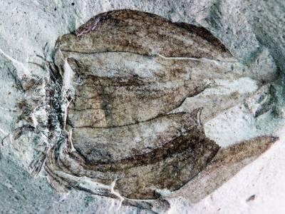 لاطینی امریکہ میں52 ملین سال پرانے پھل کی باقیات دریافت
