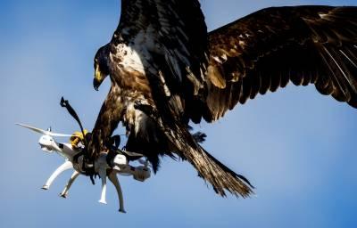 فرانس نے ڈرون کو قابو کرنے کیلئے عقاب پال لئے