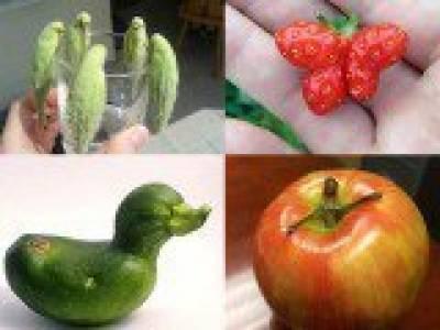 انسان و جانوروں سے مشابہہ پھل اورسبزیاں