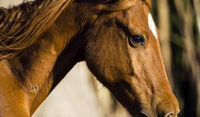 آسٹریلیا میں کس جانور کی وجہ سے سب سے زیادہ انسان موت کے منہ میں
