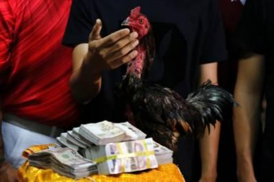 تھائی لینڈ: مرغے نے 70 ہزار ڈالرز کا انعام جیت لیا
