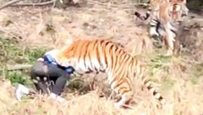 شیر نے ایک نوجوان کو اس کی بیوی اور بچے کے سامنے حملہ کر کے ہلاک کر ڈالا