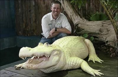 تھیم پارک گیٹرلینڈ میں بالغ سفید مگرمچھ نے عوامی توجہ حاصل کرلی