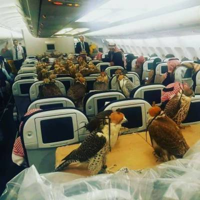 سعودی شہزادے کا 80 عقابوں کے ساتھ انوکھا سفر کہ تفصیل جان کر حیران رہ جائیں گے