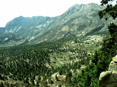 زیارت:صنوبر کے جنگلات کو عالمی ورثہ میں شامل کر لیا گیا