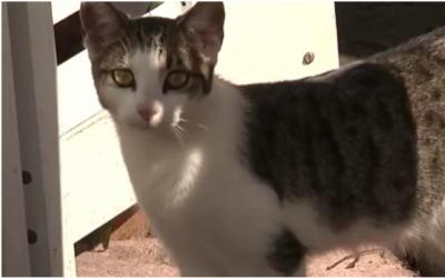 بلی کے گھورنے پر امریکی شہری نے گولی چلا دی ،عدالتی کارروائی کا سامنا