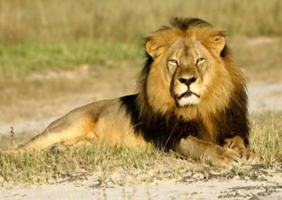 شوہر بد اخلاق ہے تو شیر کی گردن کا ایک بال آپ کے تمام مسائل سلجھا دے گا