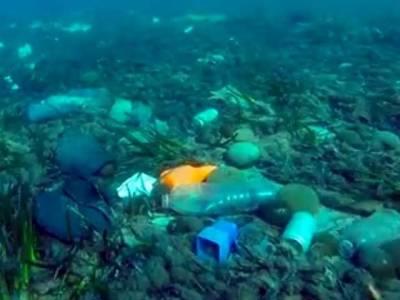 خطرناک کیمیکل سمندروں کی تہہ میں سرایت کرکے وہاں موجود جانداروں کو داغدار کررہے ہیں