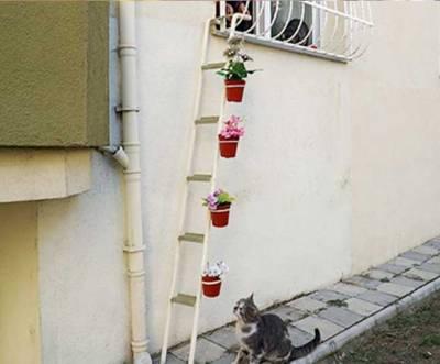 ترک خاتون کا بلیوں کی محبت میں انوکھا کام