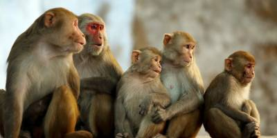 """""""مجھ سے شادی کرو گی"""" بندر اور انسان کی زبان میں مشترک جملہ سامنے آگیا"""
