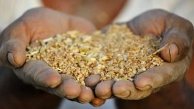 سندھ میں گندم کی خریداری کاہدف 12لاکھ ٹن مقرر
