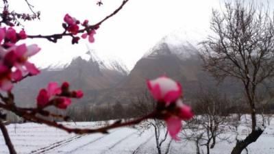 گلگت بلتستان میں موسمی تبدیلیوں سے بادام کی پیداوار متاثرہونے کا خطرہ