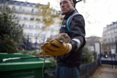 فرانس،پیرس میں چوہوں کے خاتمے کےلئے 16 لاکھ ڈالر کا منصوبہ