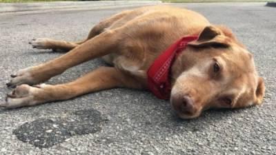 کتے کو چھیڑ نے پر 14 سالہ خانہ بدوش قتل،16سالہ ملزم فرار