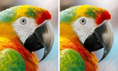 ان تصاویر میں فرق تلاش کرسکتے ہیں