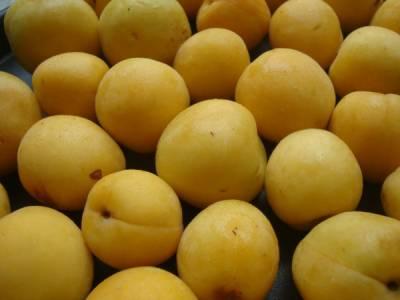 وہ پھل جس کے بیج کھانے سے آپ کی جان جاسکتی ہے