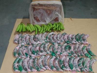 جعلی کیلوں میں چھپائی گئی17 کلو گرام کوکین برآمد ،ملزم گرفتار