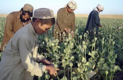 افغانستان میں گذشتہ سال کے دوران 650 ٹن منشیات پکڑی گئیں