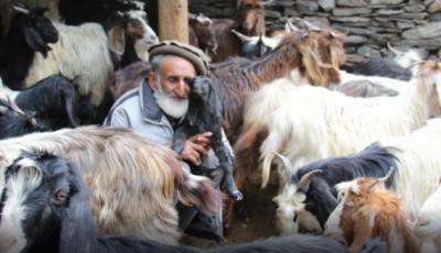 چترال میں بکریوں پر دفعہ144نافذ،چرواہا شدید مشکلات کا شکار