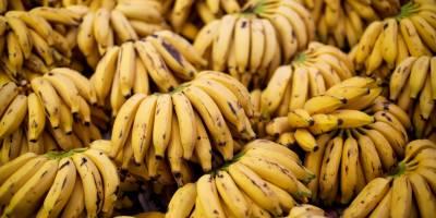 کیلا غذا ئی خوبیوں کے اعتبار سے قیمتی پھل قرار
