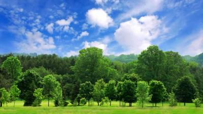 دنیا بھر میں درختوں کی 60 ہزار سے زائد اقسام