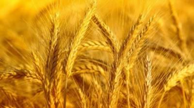 کاشتکاروں کو گندم کی قیمت کی ادائیگی کیلئے پالیسی کا اعلان