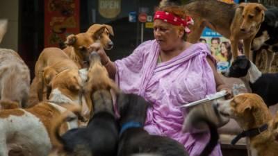 آوارہ کتوں کو پالنے والی بھارتی خاتون کی دنیا بھر میں شہرت