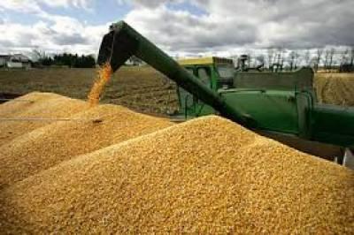 نامناسب انتظامات کے باعث ذخیرہ شدہ گندم کا 15فی صد ضائع ہو جاتا ہے ،محکمہ زراعت
