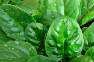 سبز پتوں والی سبزیاں افادیت، غذائیت اور امراض سے تحفظ میں سرِفہرست ہیں،ماہرین