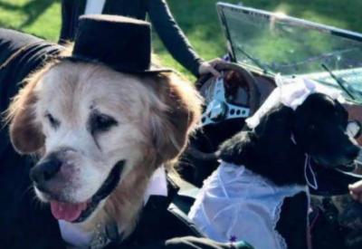 مالک نےکینسرکے مریض کتے کی موت سے قبل شادی کر وادی