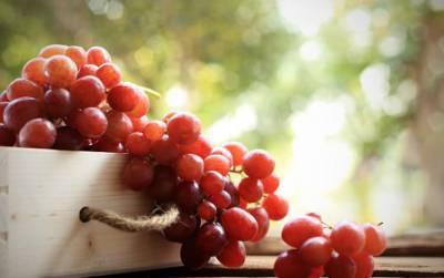 انگور کے بیج دانتوں کو مضبوط بنانے میں معاون ثابت ہو سکتے ہیں: تحقیق