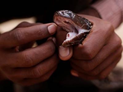 سانپ کے ڈسنے پر شوہر نے بیوی کو کاٹ دیا