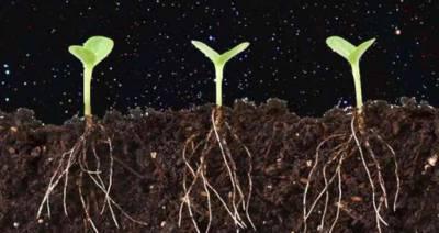 سائنسدانوں نے چاند پر سبزیاں اگانے کا منصوبہ بنا لیا