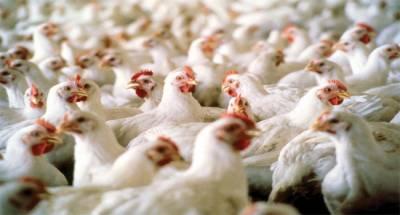 گلگت شہر میں مرغی گوشت کی قیمتوں میں زبر دست کمی