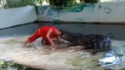 تھائی لینڈ میں سرکس کے مگرمچھ نے محافظ کا سر چبا ڈالا