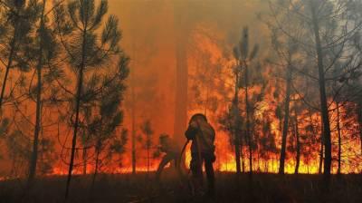پرتگال کے جنگلات میں لگنے والی آگ سے ہلاکتوں کی تعداد 62ہوگئی