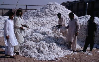 پاکستان دنیا بھر میں کپاس پیدا کرنے والے ممالک میں چوتھے نمبر پر آ گیا