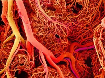 روزوں کی بدولت انسانی جسم خون کی نئی رگوں کا حامل ہوتا ہے، مصری طبی ماہرین کا دعوی