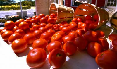 ٹماٹر سے جان لیوا بیماری کی روک تھام ممکن
