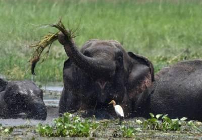 بھارت میں بدمست ہاتھی نے 15 لوگوں کوپاﺅں تلے روندکر ہلاک کر ڈالا