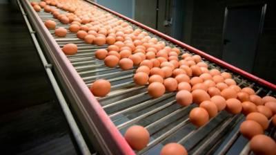 ڈنمارک میں 20 ٹن آلودہ انڈے فروخت