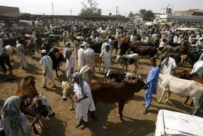 پشاور: گزشتہ سال کی نسبت اس سال قربانی کے جانوروں کی قیمتوں میں بے تحاشا اضافہ
