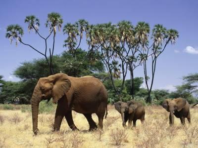 جانوروں کا عالمی دن،سوشل میڈیا پر جنگلی حیات کے ساتھ سیلفیاں ایک عذاب